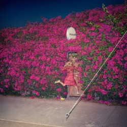 feist-pleasure-album-details